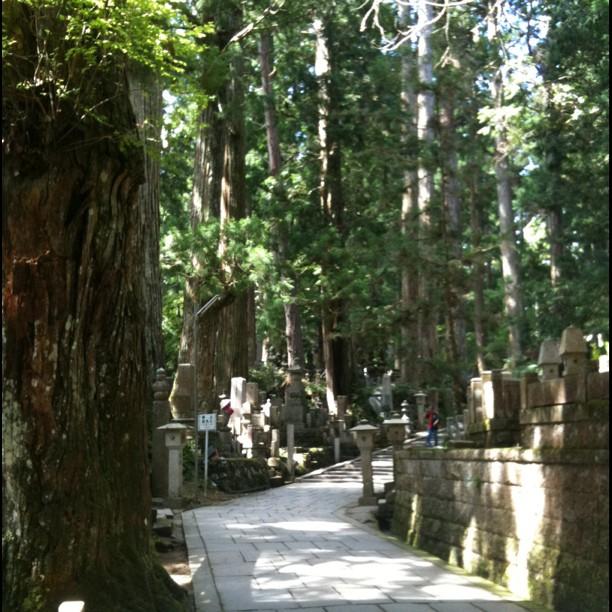 Le cimetière du Mont Koya est magnifique… Difficile de rendre la majestueusité des arbres en photo…