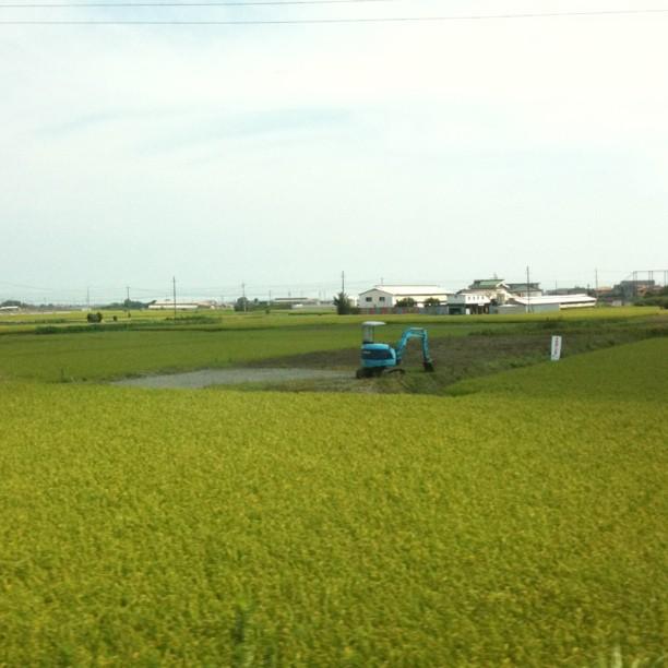 De nouveau dans le train… Direction Kyoto avec la campagne nipponne par la fenêtre.