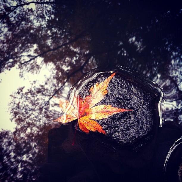 L'automne laisse doucement la place à l'hiver sur Tokyo.