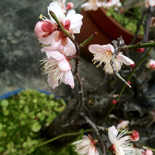 Quelle superbe journée à Osaka ! (^O^)/ On sent que le printemps est proche