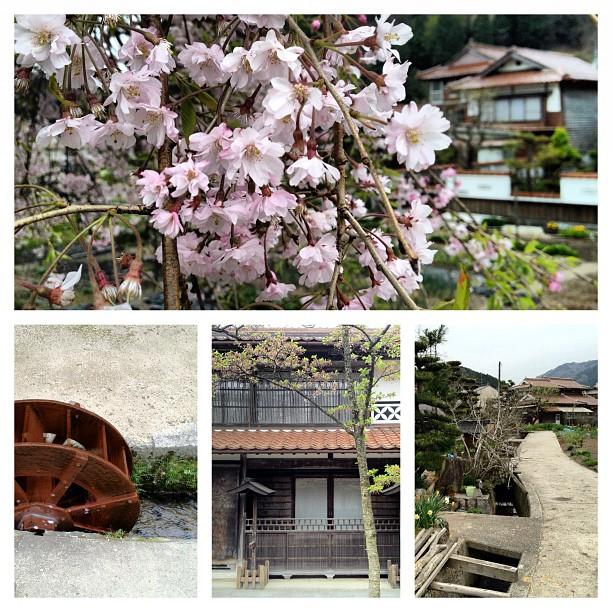 Il reste des cerisiers dans ce coin de paradis campagnard