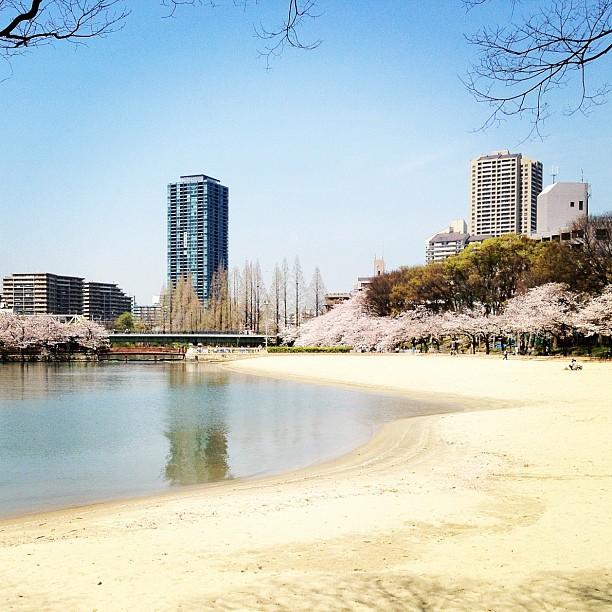 Plage urbaine bordée de cerisiers à Osaka