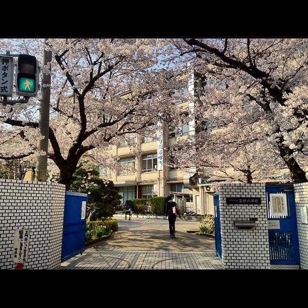 Entrée fleurie de l'école près de chez moi au nord d'Osaka