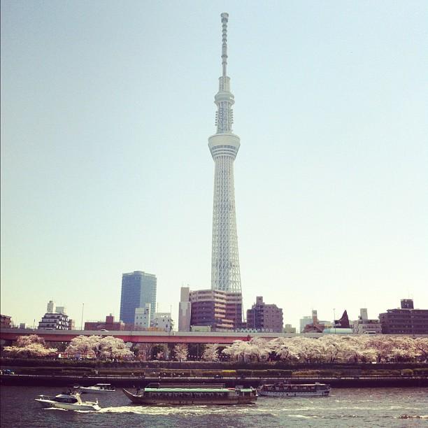 #sakurareport Tokyo Sky Tree et ses Sakura