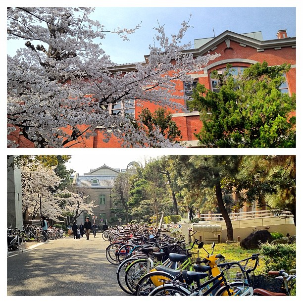 Kyodai, l'Université de Kyoto