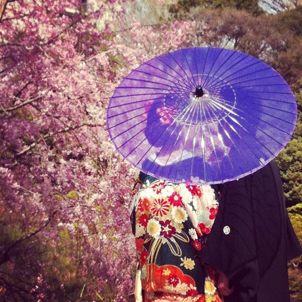 Des amoureux en kimono sous les Sakura… ❤ Tokyo !