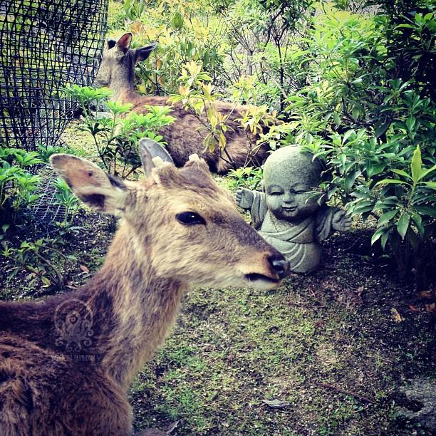Les moines de Miyajima sont toujours aussi accueillants !