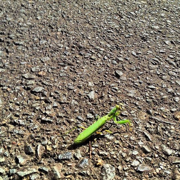 Une lueur verte sur l'asphalte