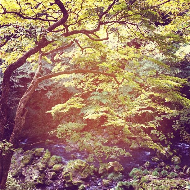 Il faut attendre encore un peu pour les feuilles d'automne… Vous venez en Novembre ?