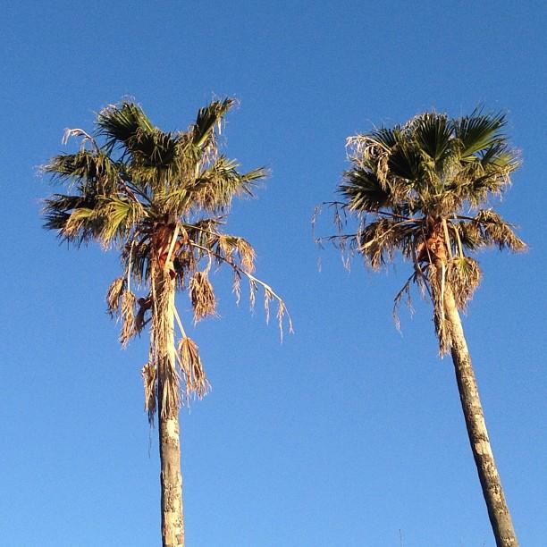 Palmiers de novembre à Nagasaki