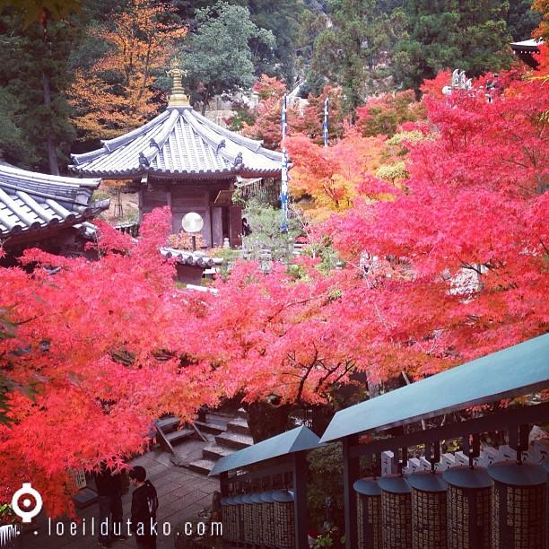 L'automne à Miyajima IV