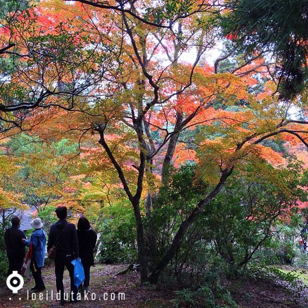 Un dimanche à Miyajima et vous?