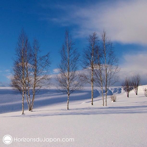 Une belle poudreuse sur Biei à Hokkaido