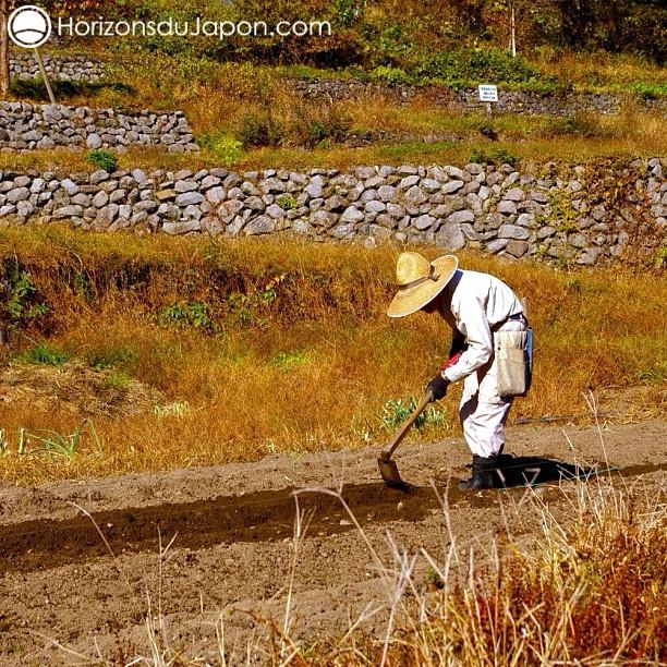 Agriculteur japonais en plein travail