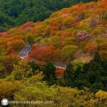 Route d'automne à Yoshino