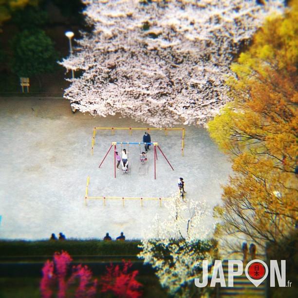 Sakura dans un parc de Tokyo vu du ciel !