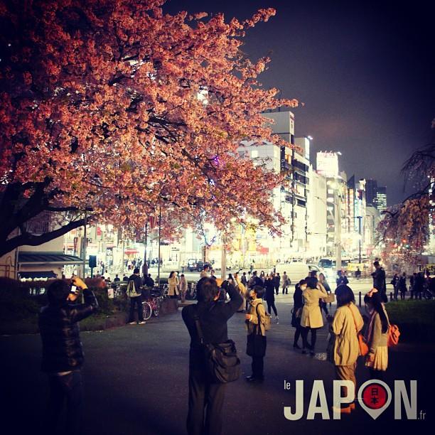 Les Sakura la nuit ! Ici à Ueno. Je vais me faire une série «cerisiers en fleurs nocturne» je crois ;)