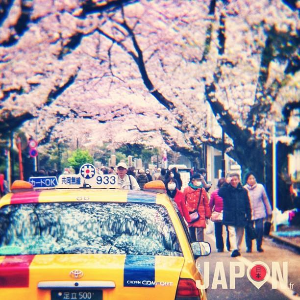 Les derniers Sakura de Tokyo !