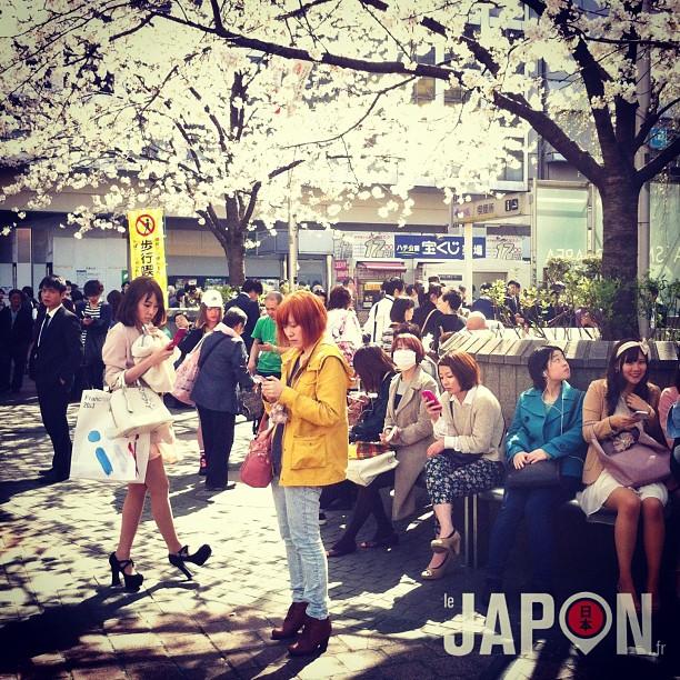 Hachiko le célèbre chien de Shibuya est toujours bien entouré… Et aujourd'hui les Sakura étaient là aussi !