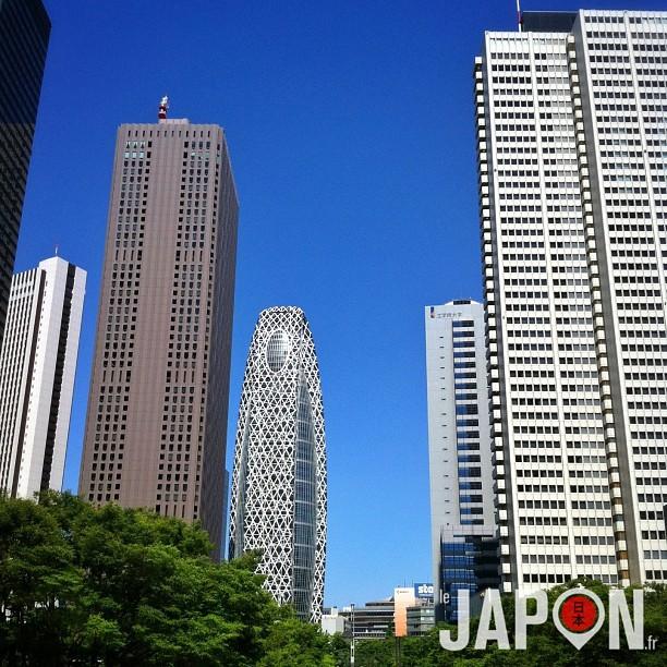 Dans la jungle tokyoïte certains arbres sont plus grands que d'autres ! Magnifique ciel bleu aujourd'hui :)