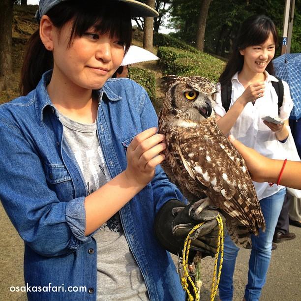 Osaka c'est chouette !