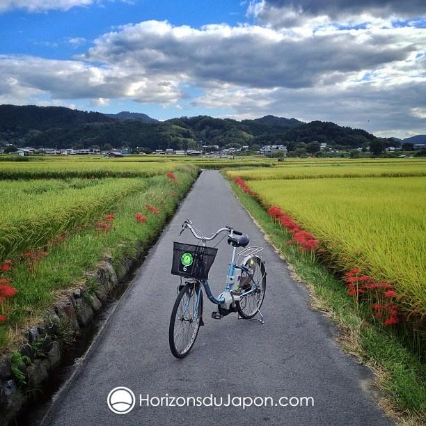 Une balade en vélo que je pourrai bientôt proposer pour les plus sportifs d'entre vous