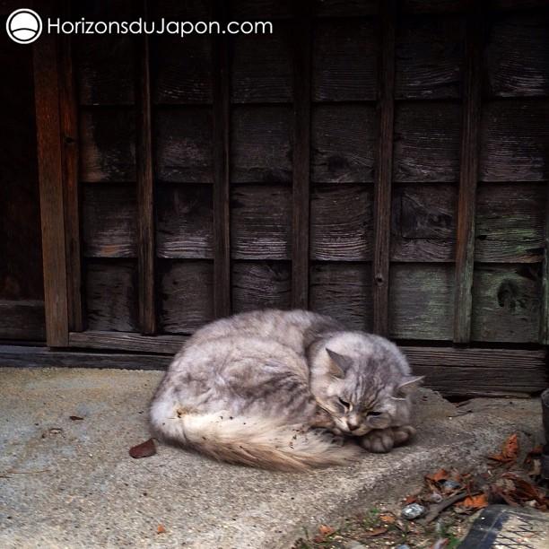 Chat de campagne japonaise