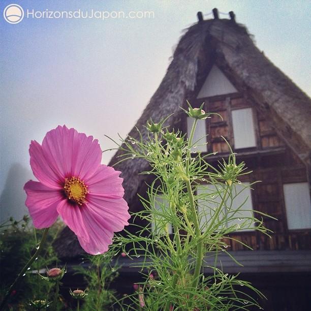 la ferme au toit de chaume dans la prairie lejapon loeildutako japon 365. Black Bedroom Furniture Sets. Home Design Ideas