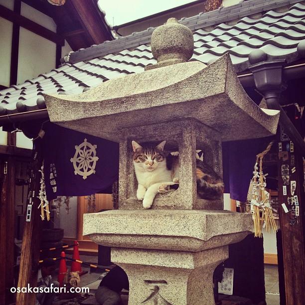 Le caïd de la lanterne du clan du Hozenji
