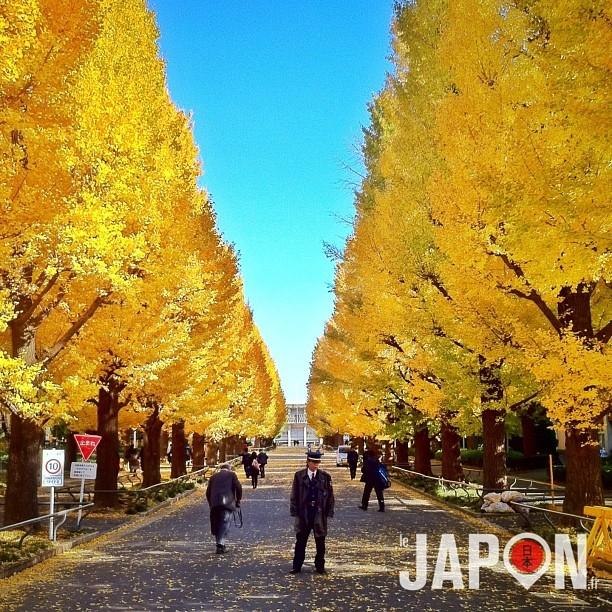 L'automne à Tokyo & Yokohama c'est maintenant !