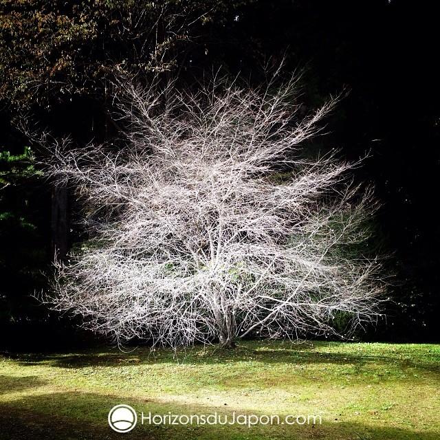 Rsultat de recherche dimages pour arbres blanc