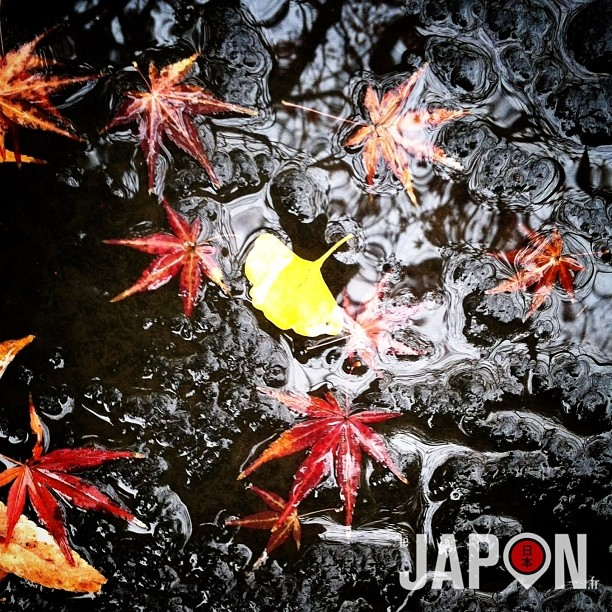 Le mélange des couleurs de fin d'automne à Tokyo :)