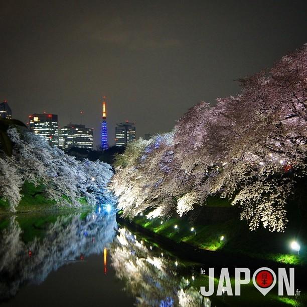 Tokyo Tower et Sakura ce soir ! Super final du Tokyo Safari, non ? ;)