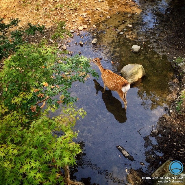 Nara et sa faune