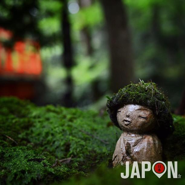 Kyoto et ses jardins secrets loin des touristes ! Merci @horizonsdujapon pour la balade :)