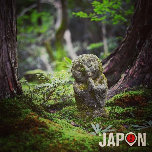Le Japon et la forêt des dieux :)