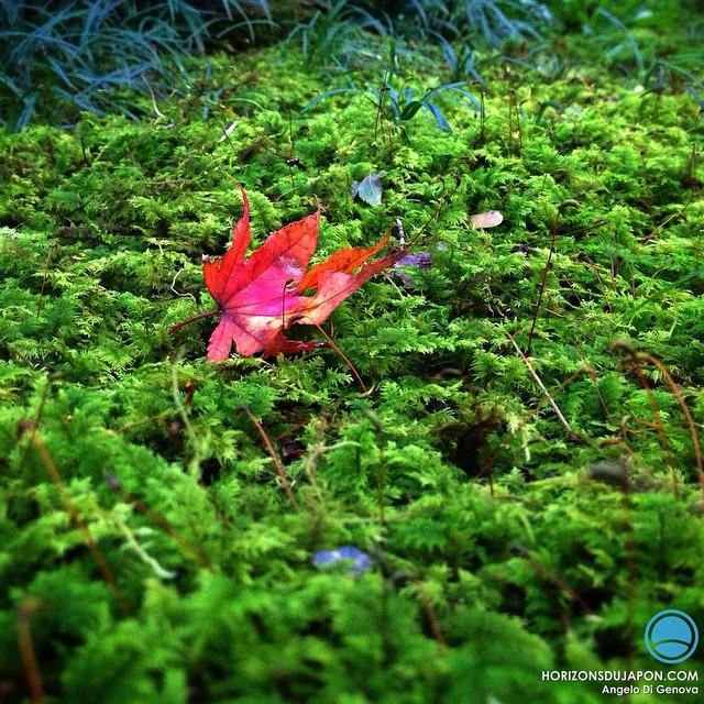 Carte postale des jardins d'automne au Japon