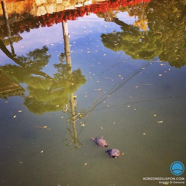 Les pins, les tortues et le poteau électrique : une fable japonaise