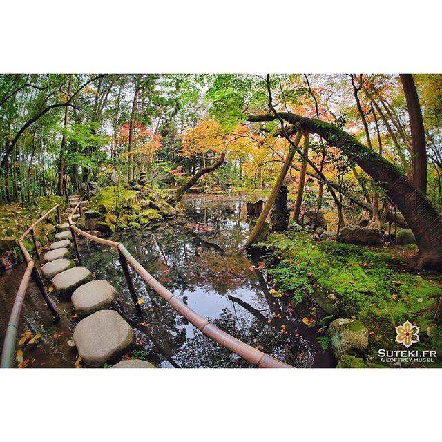 Suivre la voie des koyo #japon #kyoto