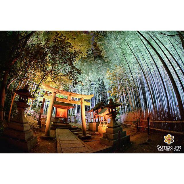 La magie des illuminations ! #japon #kyoto