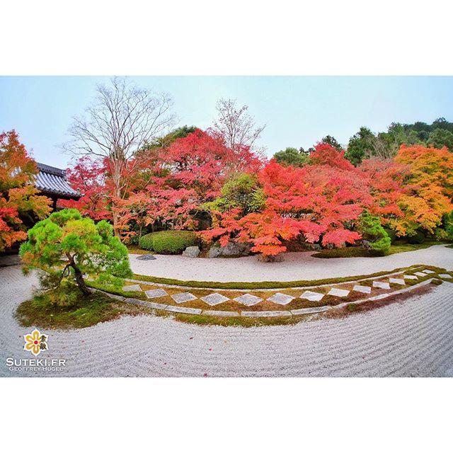 Jardin flamboyant #japon #kyoto
