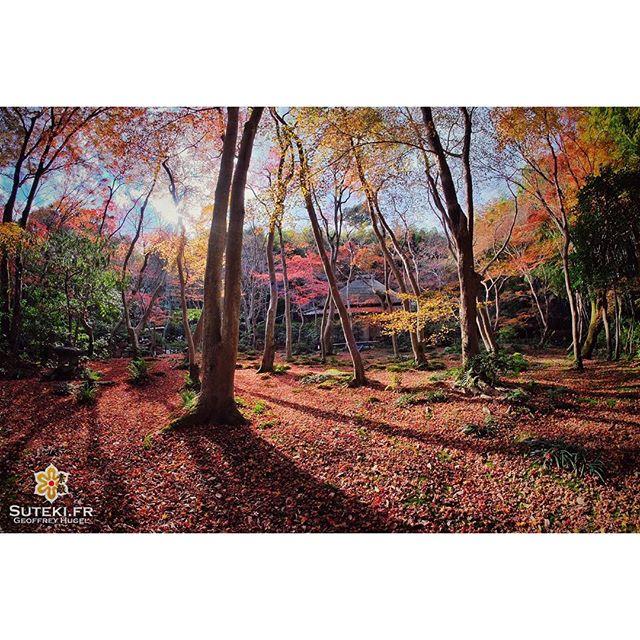 Les valeurs sûres de #kyoto en automne #japon