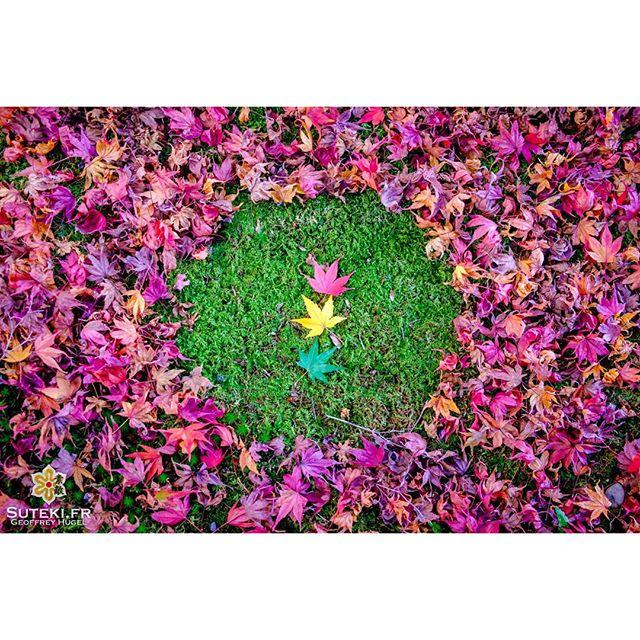 Feu(illes) tricolore(s) #japon #kyoto