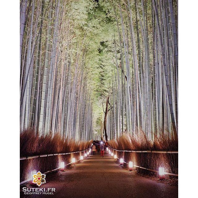 La bambouseraie d'Arashiyama sort le grand jeu ! #japon #kyoto