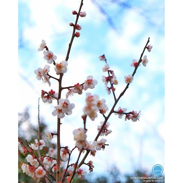Avant les cerisiers d'avril il y a d'autres plaisirs