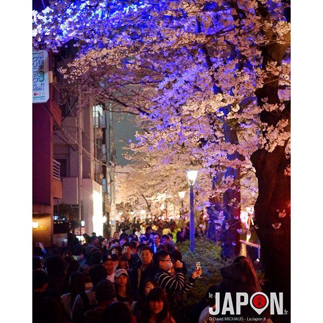Bon courage à ceux qui vont aller à Nakameguro ! #agoraphobia #SakuraReport #Sakura #Tokyo #japan