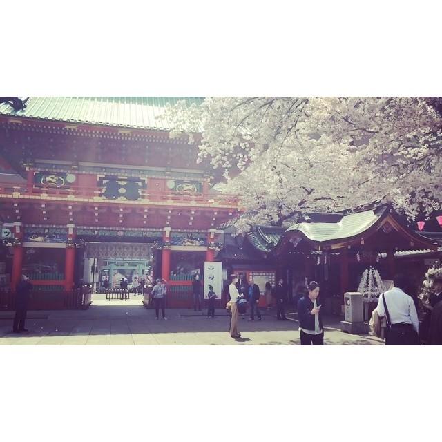 Falling Sakura