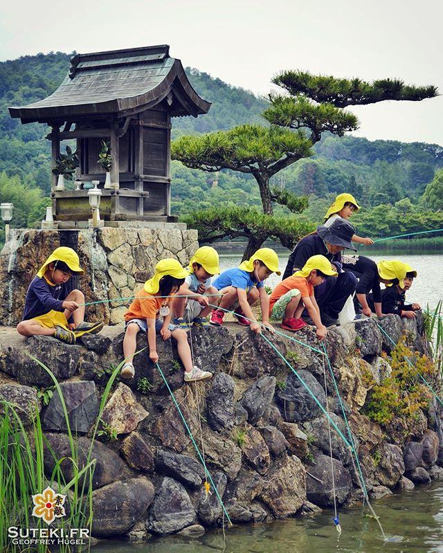 Classe verte ! #japon #kyoto #kyotosafari