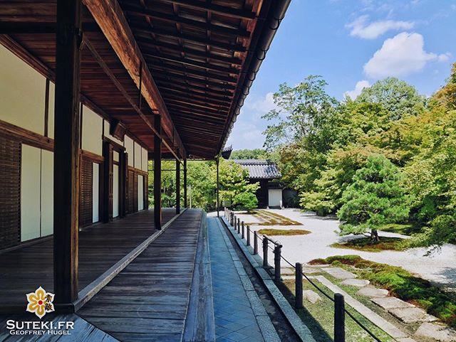 Au calme ! #japon #kyoto #kyotosafari