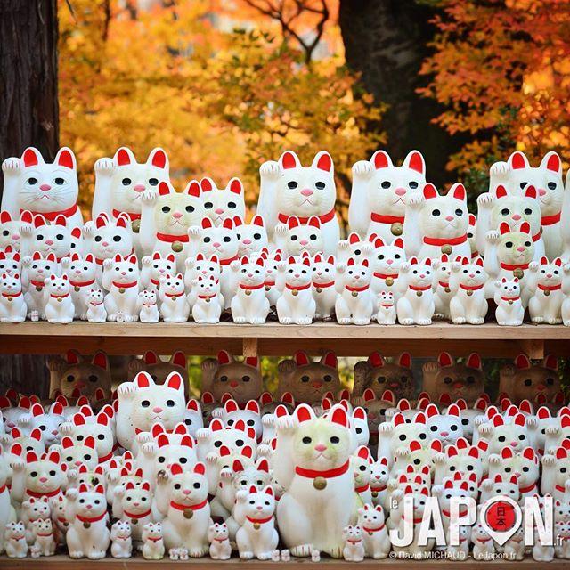 En 2012 je présentais l'inconnu Gotoku-ji (temple dédié aux Maneki Neko -chat de la fortune-) à Tokyo… Aujourd'hui tout le monde y va… #TokyoSafari